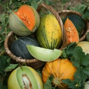 Melons en collection