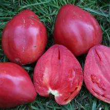 Le biau germe tomates rouges tomate coeur de boeuf rose - Planter des tomates coeur de boeuf ...